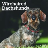 Dachshunds Wirehaired Kalender 2020