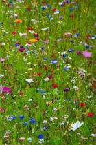 Field Of Wild Flowers Daily Planner