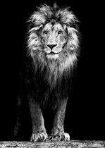 Luxe Wanddecoratie - Foto - Plexiglas - Aluminium Ophangsysteem - Lion