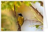 Bijzondere wenskaarten met exclusieve natuurfoto's - Vogels
