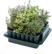 Zaaibakje voor 49 plantjes