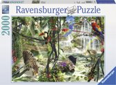 Ravensburger Jungle-impressies