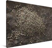 Bleke boekweit korrels op een plaat Canvas 120x80 cm - Foto print op Canvas schilderij (Wanddecoratie woonkamer / slaapkamer)