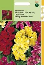 Hortitops Zaden - Hanenkam mix (Celosia cristata)