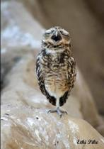 Ethi Pike - One Legged Singing Owl / Notebook / Extended Lines / Soft Matte