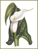 Notebook Calla Lily