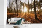 Fotobehang vinyl - De herfstzon schijnt door de bomen bij een zonsondergang breedte 390 cm x hoogte 260 cm - Foto print op behang (in 7 formaten beschikbaar)