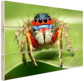 Springende spin Hout 80x60 cm - Foto print op Hout (Wanddecoratie)