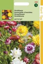 Hortitops Zaden - Hoge Strobloem (Helichrysum)