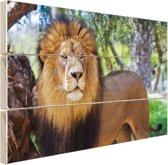 Staande mannelijke leeuw Hout 60x40 cm - Foto print op Hout (Wanddecoratie)