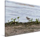Poelruiter aan het water Canvas 30x20 cm - klein - Foto print op Canvas schilderij (Wanddecoratie woonkamer / slaapkamer)