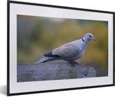 Foto in lijst - Een tortelduif op een bankje fotolijst zwart met witte passe-partout 60x40 cm - Poster in lijst (Wanddecoratie woonkamer / slaapkamer)