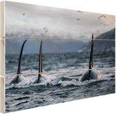 Drie orkas Hout 60x40 cm - Foto print op Hout (Wanddecoratie)