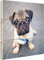 Puppy ogen Hout 50x50 cm - Foto print op Hout (Wanddecoratie)