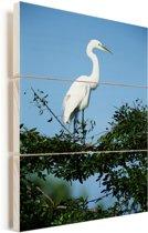 Een grote zilverreiger staat op een begroeide tak in de staat Florida Vurenhout met planken 40x60 cm - Foto print op Hout (Wanddecoratie)
