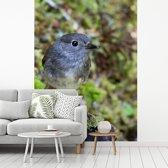 Fotobehang vinyl - Close-up van een Nieuw-Zeelandse vliegenvanger breedte 295 cm x hoogte 400 cm - Foto print op behang (in 7 formaten beschikbaar)