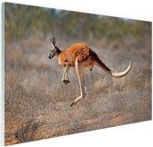 Een springende kangoeroe Glas 60x40 cm - Foto print op Glas (Plexiglas wanddecoratie)