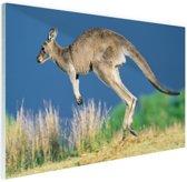 Springende kangoeroe Glas 60x40 cm - Foto print op Glas (Plexiglas wanddecoratie)
