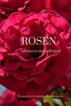 Rosen Pflanzen Und Pflegen