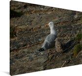 Een Zilvermeeuw op de rotsen Canvas 140x90 cm - Foto print op Canvas schilderij (Wanddecoratie woonkamer / slaapkamer)