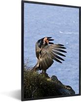 Foto in lijst - Een Californische condor bij de Stille Oceaan fotolijst zwart 40x60 cm - Poster in lijst (Wanddecoratie woonkamer / slaapkamer)
