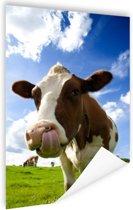 Koe steekt tong uit Poster 40x60 cm - Foto print op Poster (wanddecoratie woonkamer / slaapkamer) / Dieren Poster