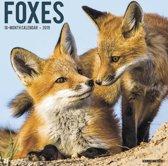 Vossen - Foxes 2019 Kalender