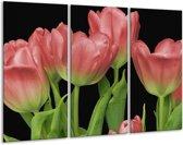 Glasschilderij Tulpen | Rood, Groen, Zwart | 120x80cm 3Luik | Foto print op Glas |  F003197