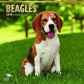 Honden kalender 2018 - jaarkalender Beagles