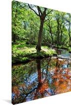 Reflectie in een beekje in het Nationaal park New Forest in Engeland Canvas 120x180 cm - Foto print op Canvas schilderij (Wanddecoratie woonkamer / slaapkamer) XXL / Groot formaat!