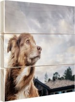 Starende hond Hout 160x120 cm - Foto print op Hout (Wanddecoratie) XXL / Groot formaat!