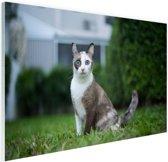 Siamese kat Glas 90x60 cm - Foto print op Glas (Plexiglas wanddecoratie)