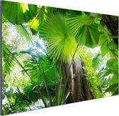 Tropisch regenwoud Aluminium 120x80 cm - Foto print op Aluminium (metaal wanddecoratie)