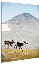 FotoCadeau.nl - Herten in de bergen Aluminium 60x90 cm - Foto print op Aluminium (metaal wanddecoratie)