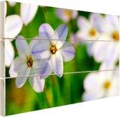 Wit-paarse lelies Hout 60x40 cm - Foto print op Hout (Wanddecoratie)