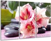 Glasschilderij Bloem | Roze, Wit, Groen | 120x80cm 3Luik | Foto print op Glas |  F004047