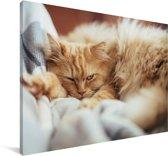 Slaperige Perzische kat Canvas 90x60 cm - Foto print op Canvas schilderij (Wanddecoratie woonkamer / slaapkamer) / Huisdieren Canvas Schilderijen
