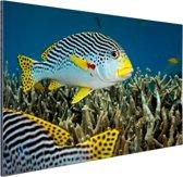 Vis met diagonale strepen Aluminium 30x20 cm - klein - Foto print op Aluminium (metaal wanddecoratie)