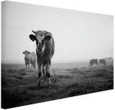 Zwart-wit koeien Canvas 80x60 cm - Foto print op Canvas schilderij (Wanddecoratie woonkamer / slaapkamer) / Dieren Canvas Schilderijen