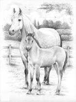 Schetsen Op Nummer - Paard