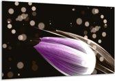 Glasschilderij Tulp | Paars, Zwart | 120x70cm 1Luik | Foto print op Glas |  F004969