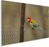 Kleurrijke parkiet op een hek Plexiglas 120x80 cm - Foto print op Glas (Plexiglas wanddecoratie)