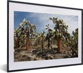 Foto in lijst - Cactussen Galapagoseilanden bij Ecuador fotolijst zwart met witte passe-partout klein 40x30 cm - Poster in lijst (Wanddecoratie woonkamer / slaapkamer)