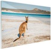 Omkijkende kangoeroe Glas 60x40 cm - Foto print op Glas (Plexiglas wanddecoratie)