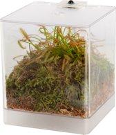 Swampworld Mini Terrarium - LED Verlichting - Vleesetende Plant - Zonnedauw