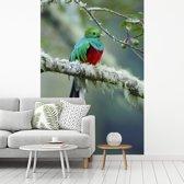 Fotobehang vinyl - Quetzal in een eikenbos in Costa Rica breedte 180 cm x hoogte 270 cm - Foto print op behang (in 7 formaten beschikbaar)