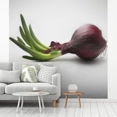 Fotobehang vinyl - Groene stengel ontspringt uit de bloeiende rode ui breedte 260 cm x hoogte 260 cm - Foto print op behang (in 7 formaten beschikbaar)