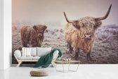 Fotobehang vinyl - Portret van twee Schotse hooglanders breedte 600 cm x hoogte 360 cm - Foto print op behang (in 7 formaten beschikbaar)