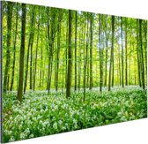 Groene bomen in het bos Aluminium 60x40 cm - Foto print op Aluminium (metaal wanddecoratie)