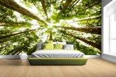 FotoCadeau.nl - Hoge groene bomen in jungle Fotobehang 380x265